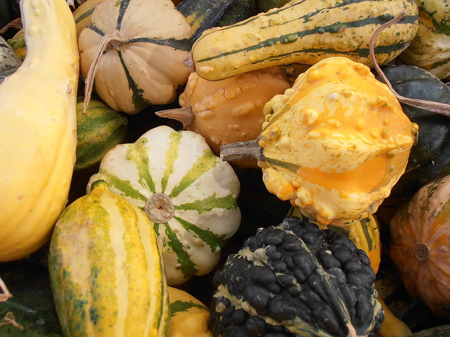 Gourds Photograph - Gourds by Kimberly Perry