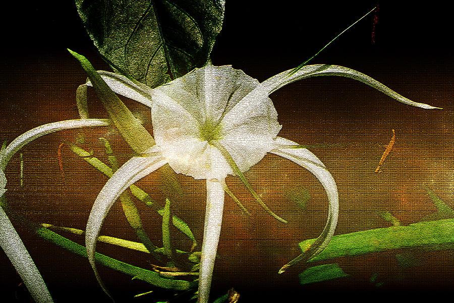 Flower Photograph - Graceful by Ellen Heaverlo