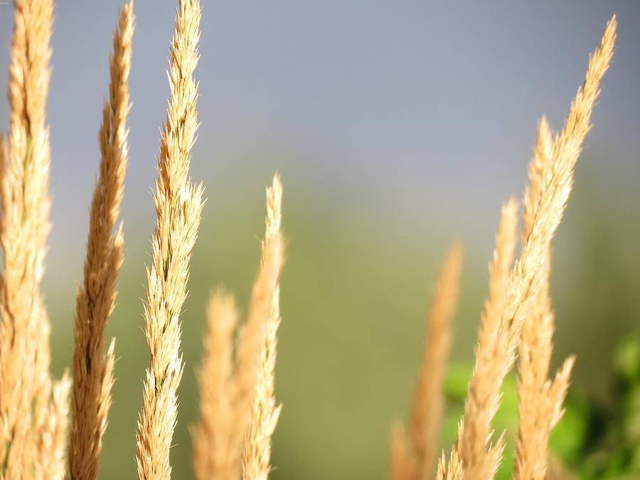 Landscape Photograph - Grain by Don Barnes