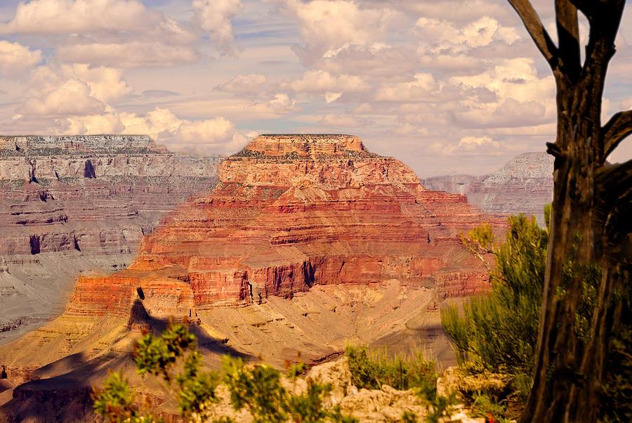 Canyon Photograph - Grand Canyon - Yavapai  by Bob and Nadine Johnston