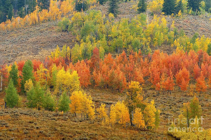 Bronstein Photograph - Grand Teton Fall Color by Sandra Bronstein