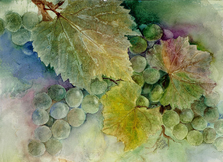 No Text Painting - Grapes II by Judy Dodds