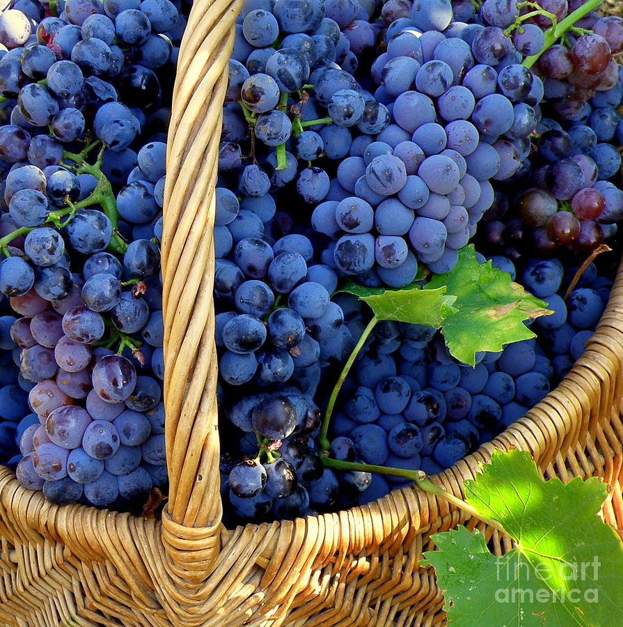 Grapes Photograph - Grapes In A Basket by Lainie Wrightson