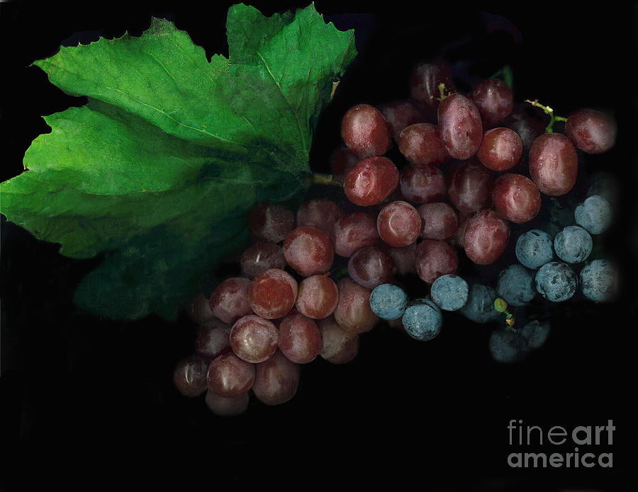 Grapes Photograph - Grapes In Black by Casey DiDonato