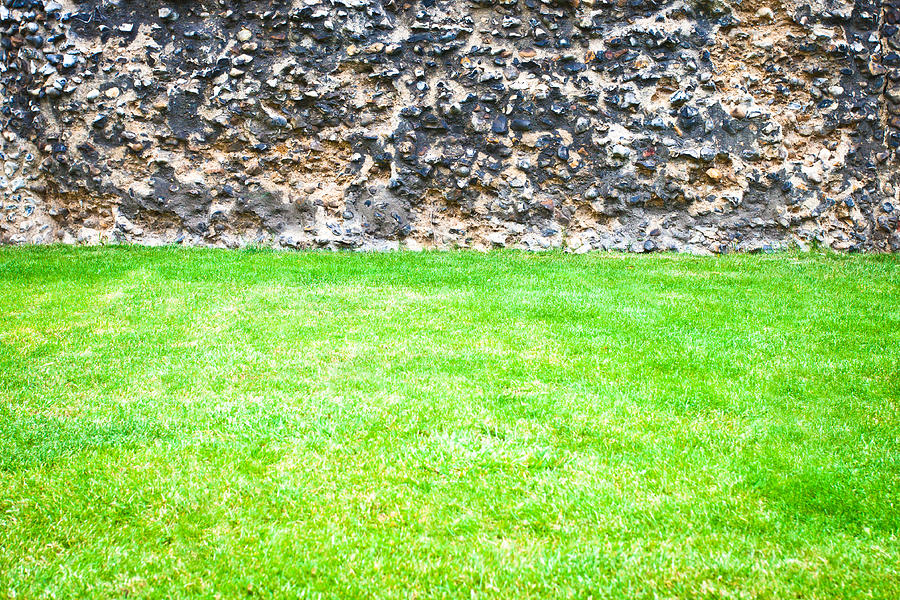 Background Photograph - Grass And Stone Wall by Tom Gowanlock