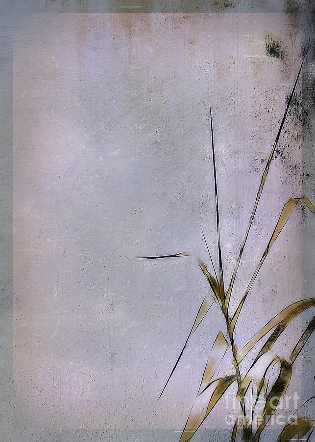 Grass Photograph - Grass And Wall by Judi Bagwell