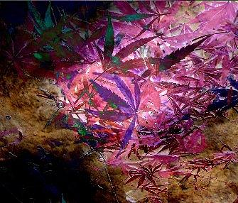 Grass Digital Art by Casper WithLove