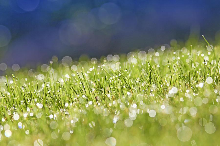 Horizontal Photograph - Grass, Close-up by Tony Cordoza