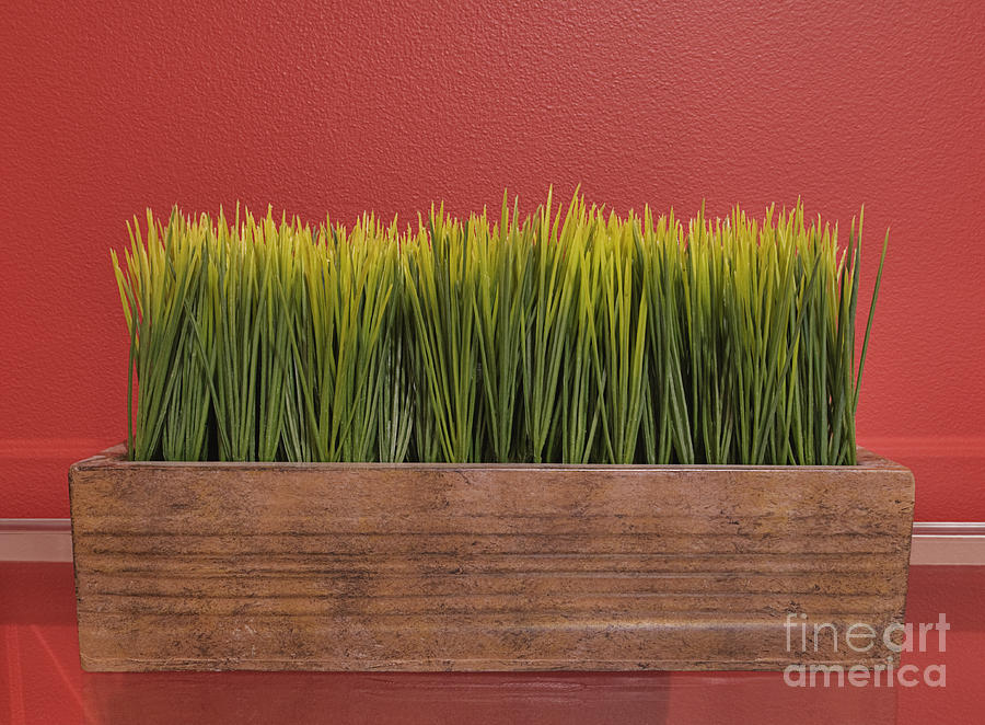 Grass In Planter Box Photograph By Andersen Ross