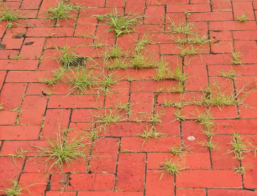 Pattern Photograph   Grass On Brick Patio By Jim Albert