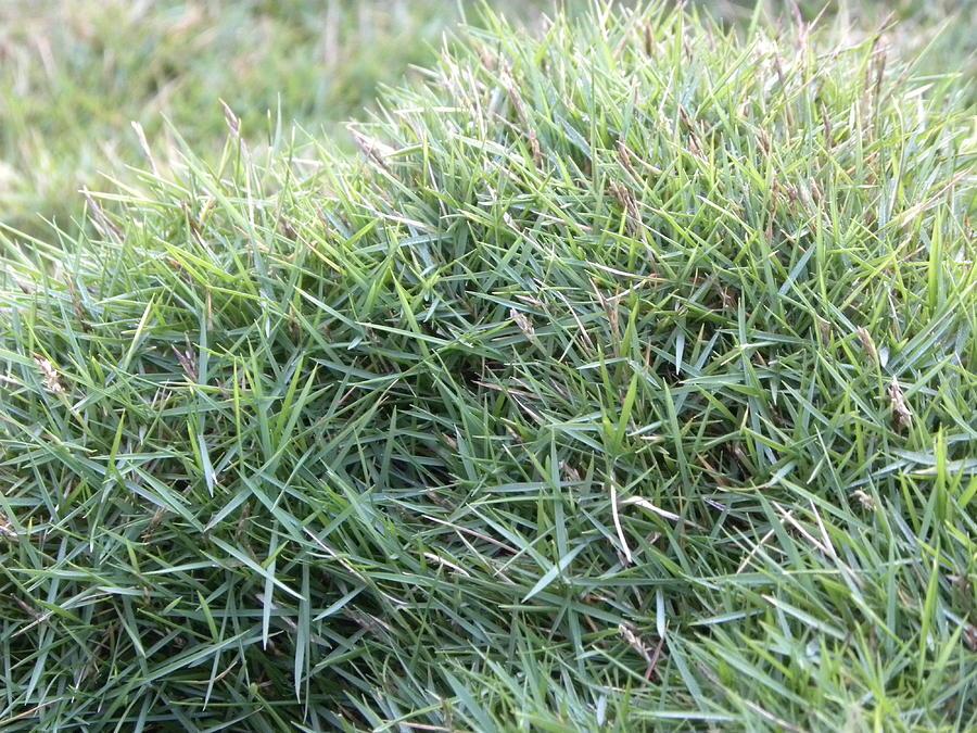 Grass Photograph by Vish Pai