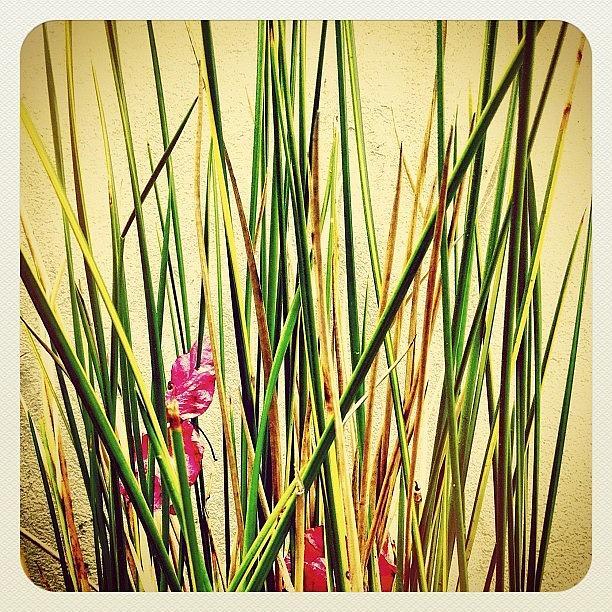 Nature Photograph - Grasses by Julie Gebhardt