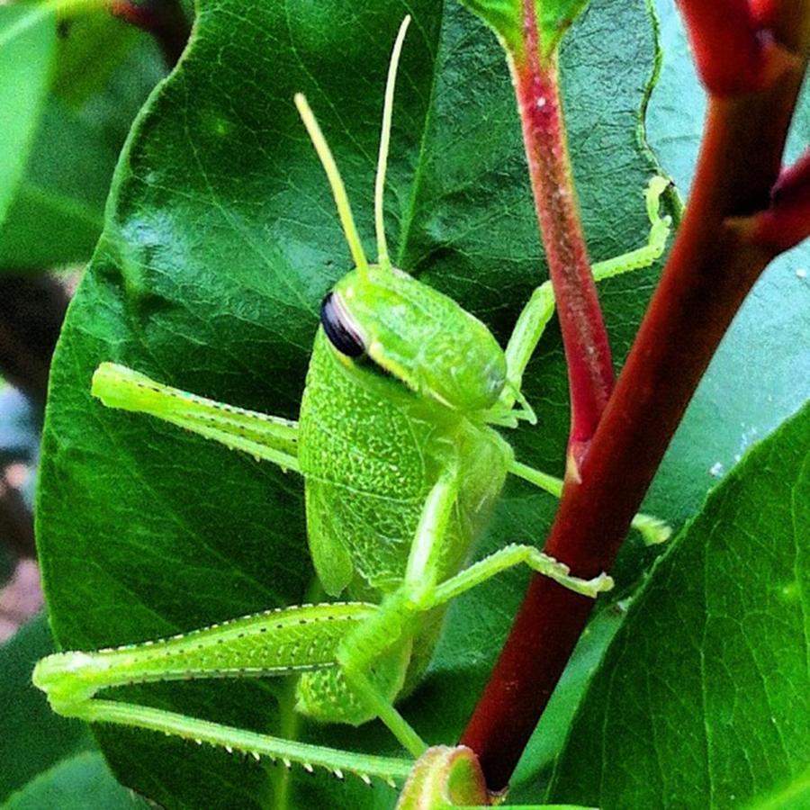 Grasshopper Posing For Me :) Photograph by Dana Coplin