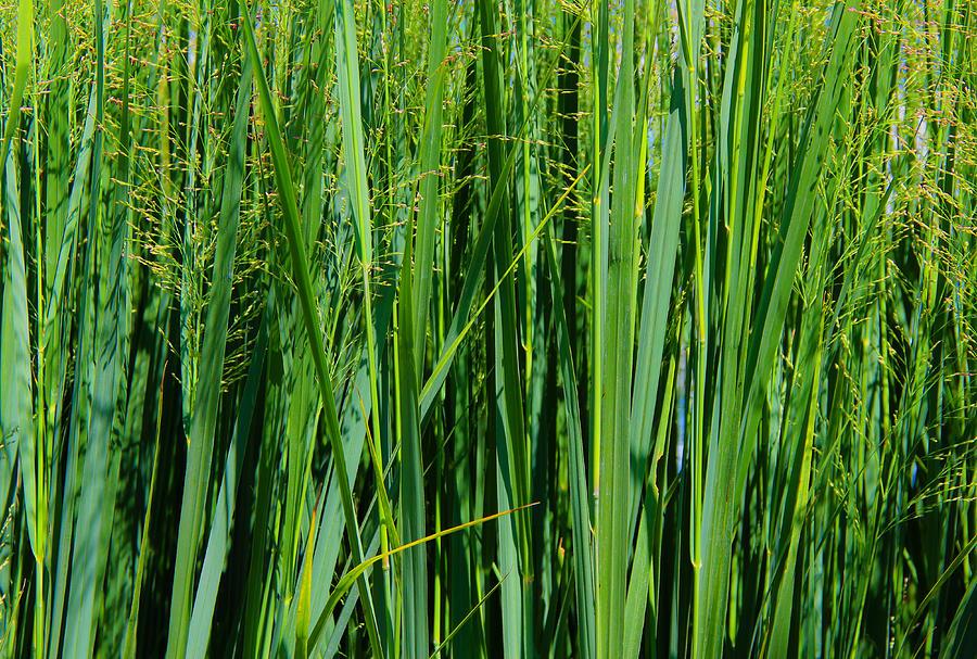 Grassland Photograph - Grassland by Rachel Cohen