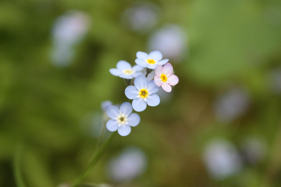 Flowers Photograph - Grateful by C E Dyer