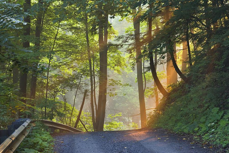 Light Photograph - Gravel Road At Sunrise, Pelham, Ontario by Darwin Wiggett