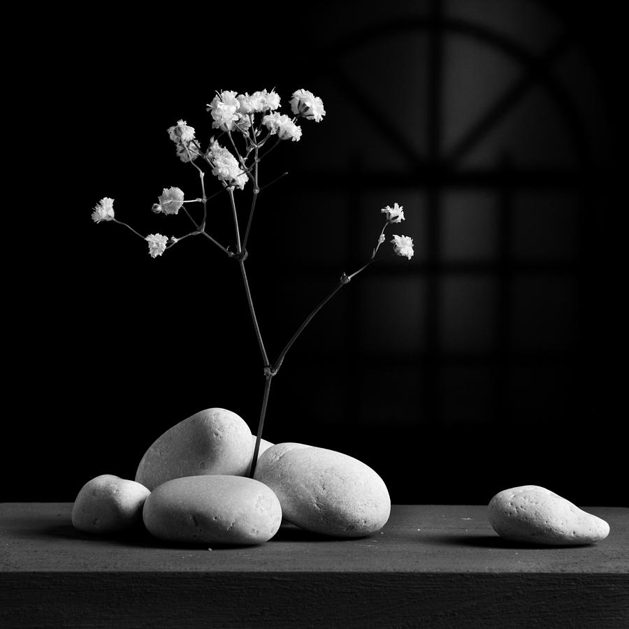 Flower Photograph - Gray Variation - Rocks by Ovidiu Bastea