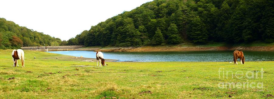 Grass Photograph - Grazing By The Water by Alfredo Rodriguez