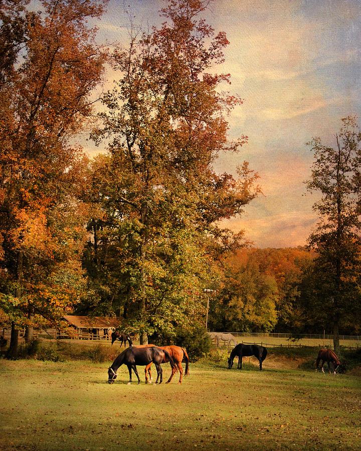 Autumn Photograph - Grazing In Autumn by Jai Johnson