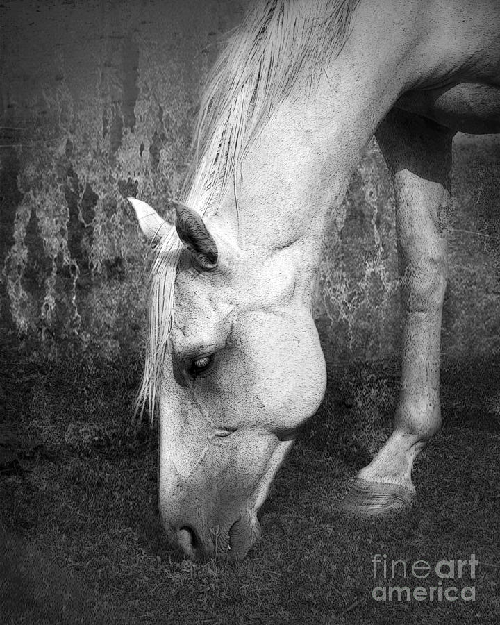 Horse Photograph - Grazing In Black And White by Betty LaRue