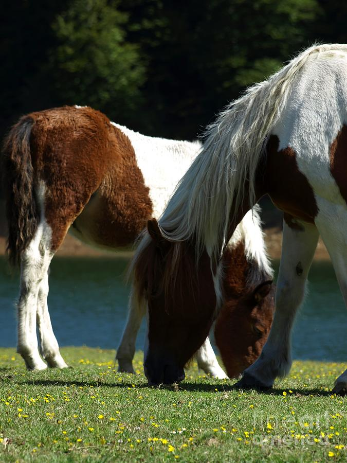 Grass Photograph - Grazing Together by Alfredo Rodriguez