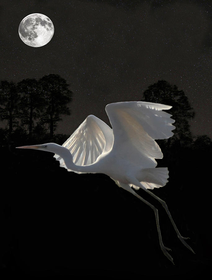Great Egrets Mixed Media - Great Egret In Flight by Eric Kempson