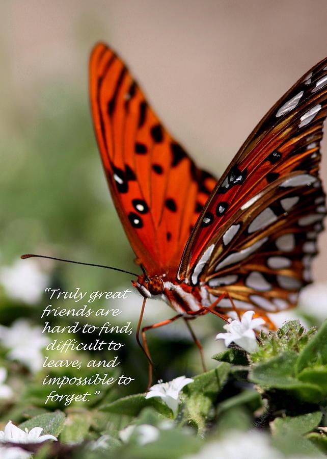 Friends Photograph - Great Friends Card by Travis Truelove