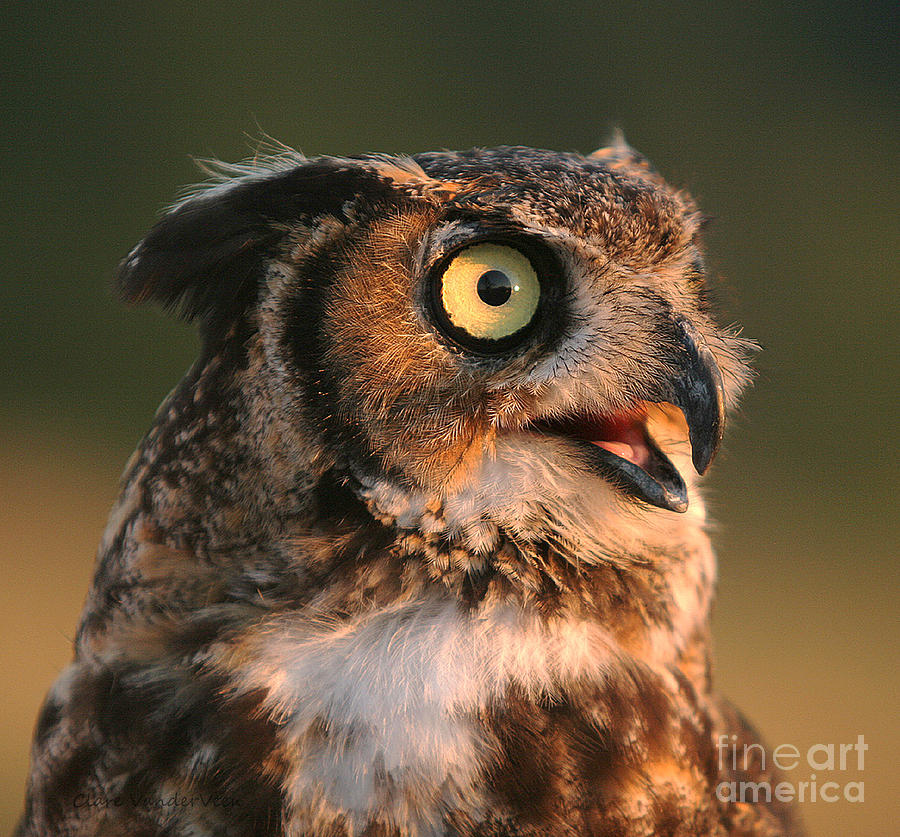 Owl Photograph - Great Horned Owl by Clare VanderVeen