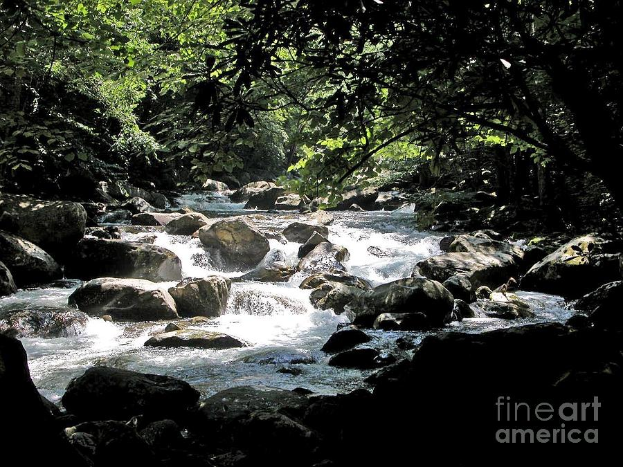 Rivers Photograph - Great Stream Great Smokeys by Don F  Bradford