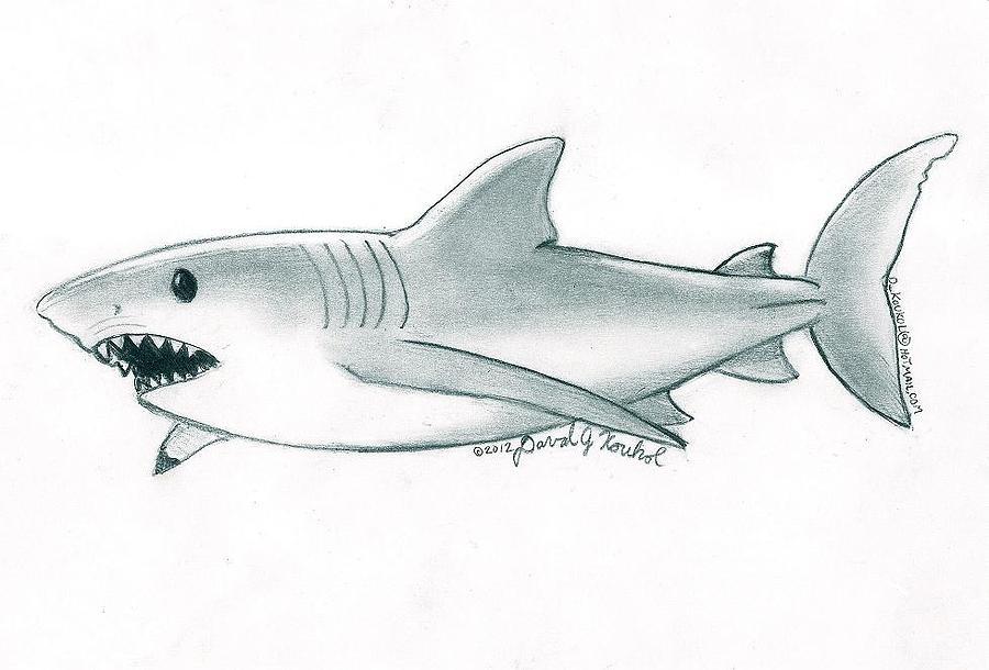 Great White Shark Drawing By David Koukol