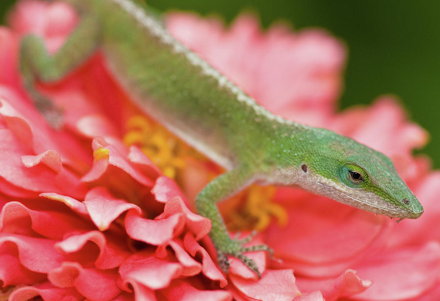 Horizontal Photograph - Green And Pink In Garden by Jeff R Clow