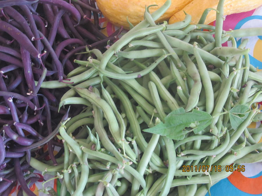 Green And Purple Beans Photograph by Tina M Wenger