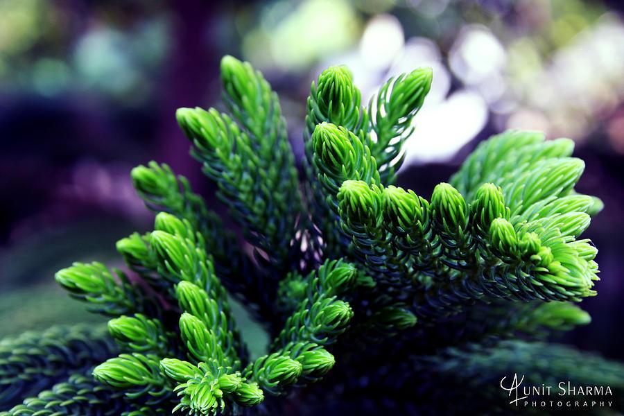 Green Photograph - Green by Aunit Sharma