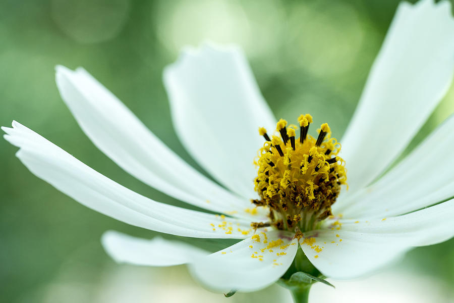 Bloom Photograph - Green Background by Daniel Kulinski