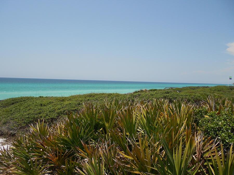 Green Photograph - Green Beach by Craig Keller