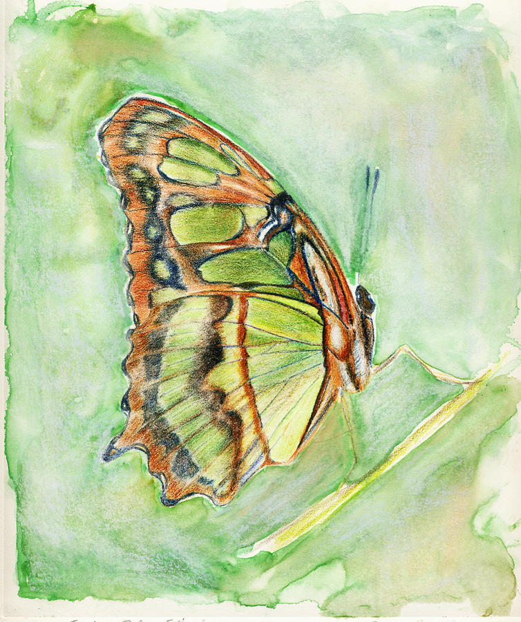 Butterfly Painting - Green Butterfly by Linda Pope