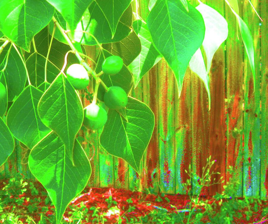 Plant Photograph - Green Curtain by Juliana  Blessington