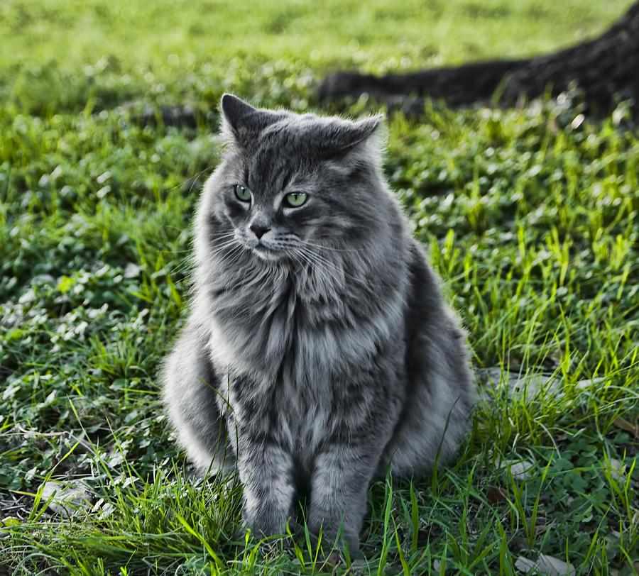 Animal Photograph - Green Eye by Kelly Rader