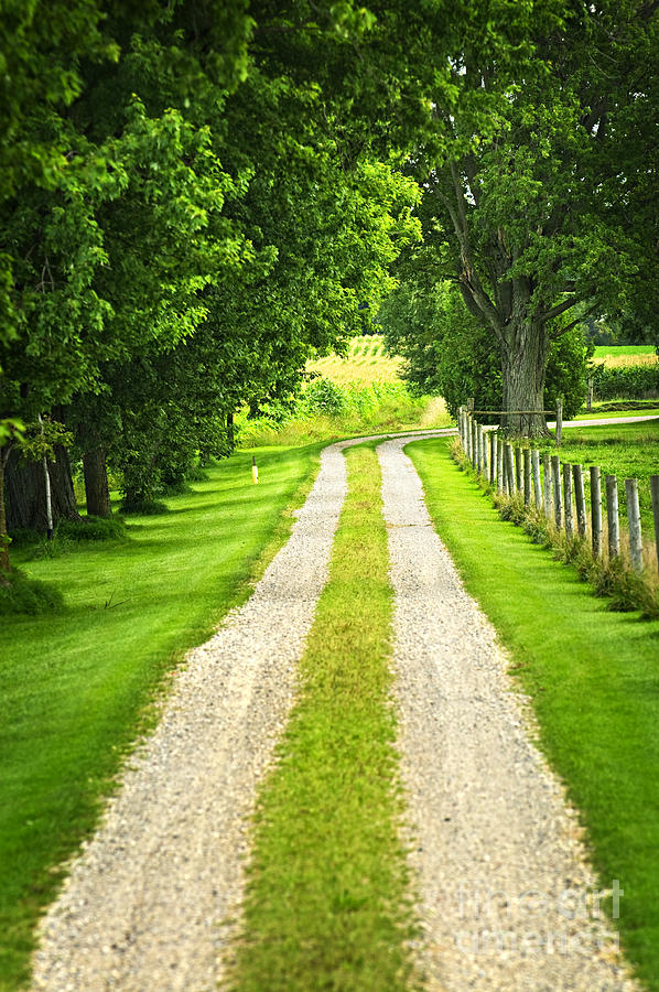 Farm Photograph - Green Farm Road by Elena Elisseeva
