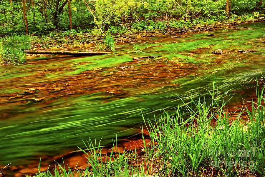 River Photograph - Green Forest River by Elena Elisseeva