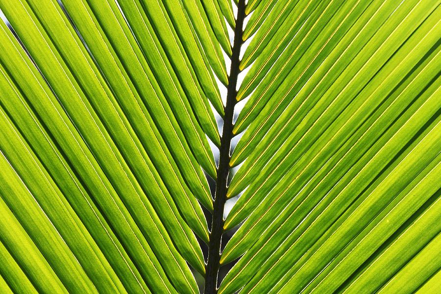 Green Photograph - Green Fronds by Lauri Novak