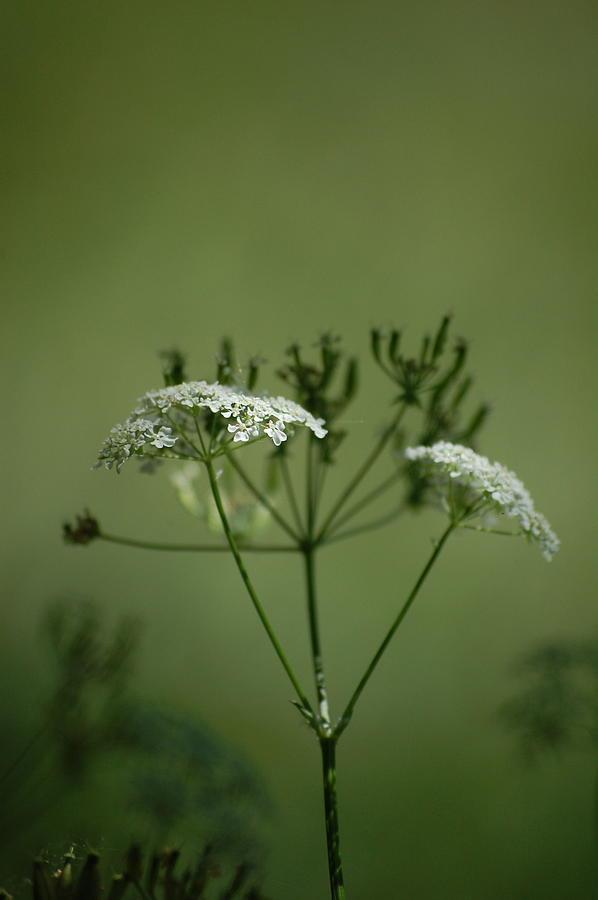 Garden Photograph - Green Garden by Dickon Thompson