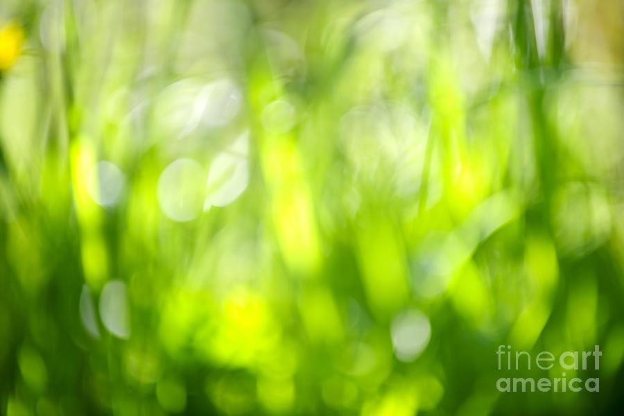 Green Photograph - Green Grass In Sunshine by Elena Elisseeva