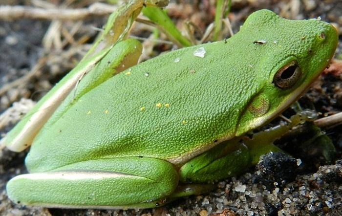Frog Photograph - Green Green by William Bryan