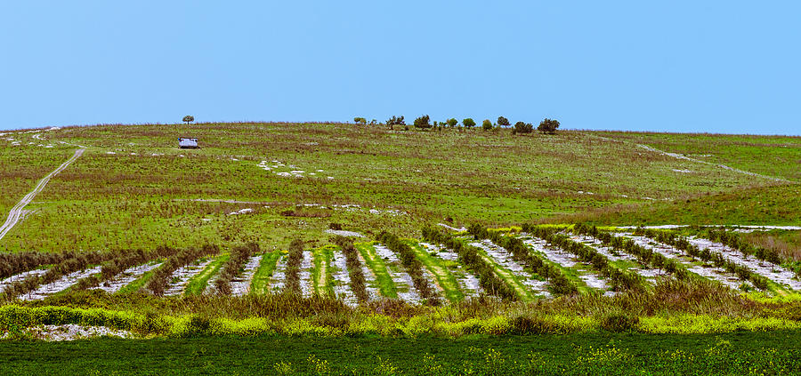 Agriculture Photograph - Green hills by Michael Goyberg