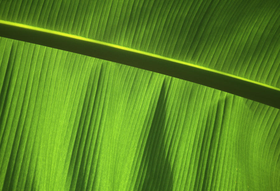 Plant Photograph - Green Leaf, Close-up by Axiom Photographic