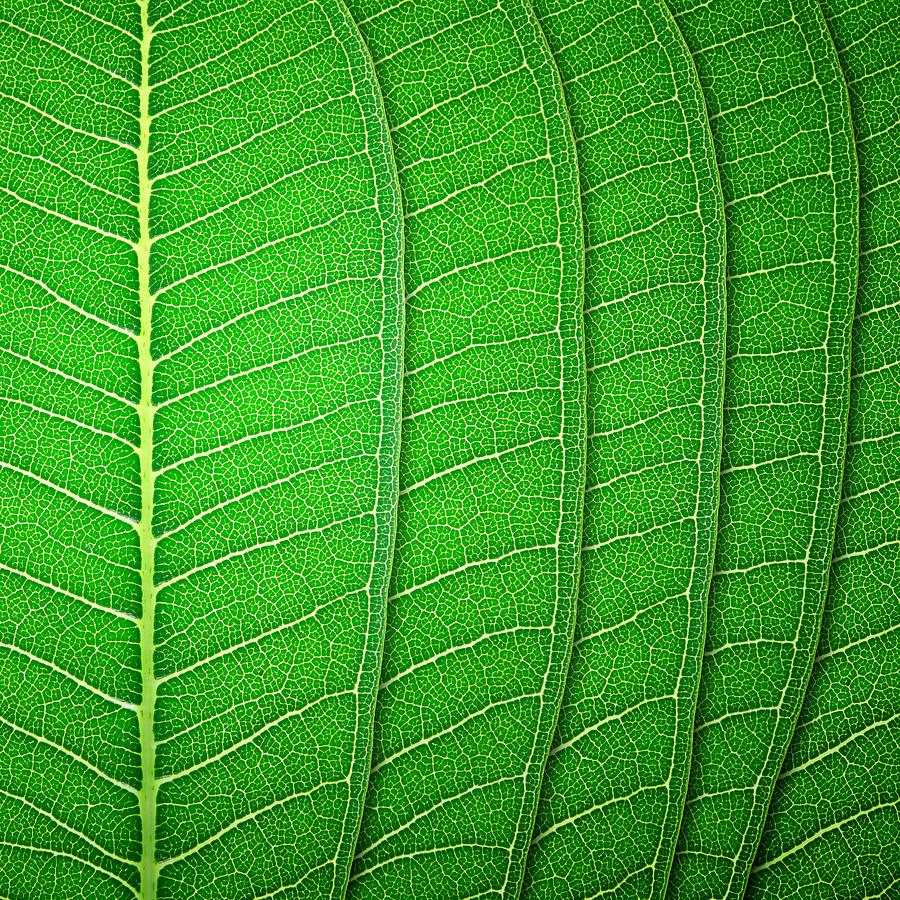 New Photograph - Green Leaf Texture by Natthawut Punyosaeng