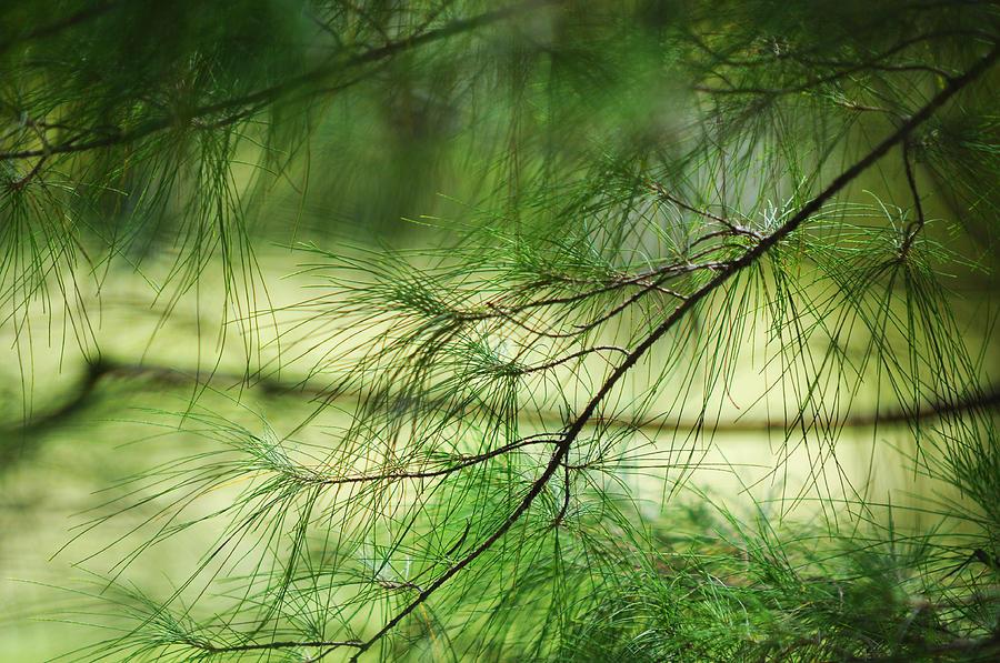 Nature Photograph - Green Light by Jenny Rainbow