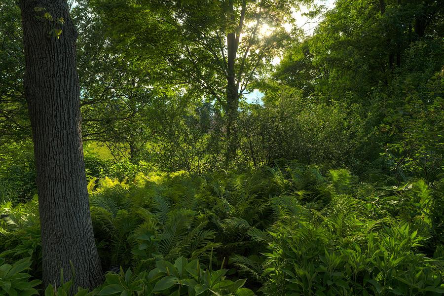 Chicago Photograph - Green Light by Steve Gadomski