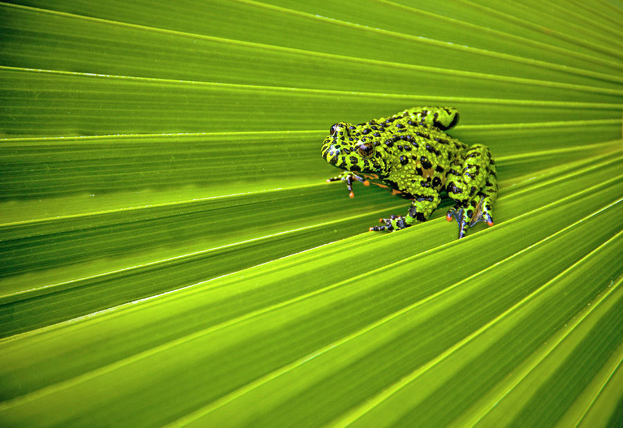 Horizontal Photograph - Green Lines Of Nature by Jeff R Clow